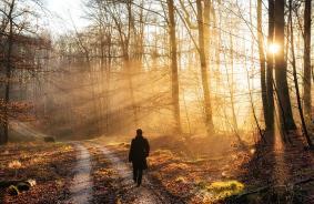 walk-in-the-forest-warm-light-sun-is-shining-matthias-hauser
