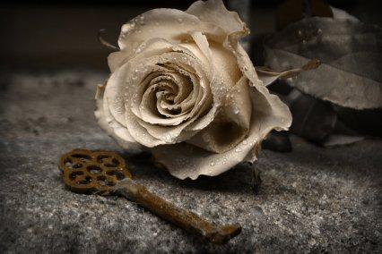golden_rose